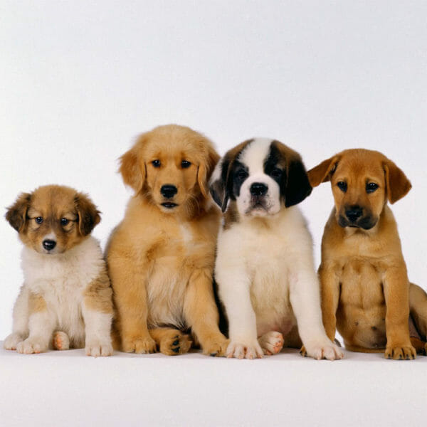 Set your new Puppy off to the best possible start with Puppy Foundations Class!