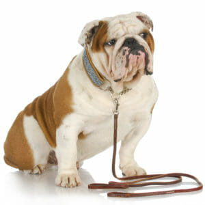 Obedience Challenges takes your dog training and control to the next step.