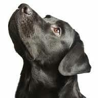 The Basic Obedience Class addresses bad habbits and reinforces great behaviors!