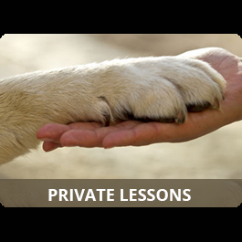 Private Dog Training Tutoring