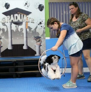 trick training, Rockin' Dawgs, Rockledge, dog training, positive reinforcement, force-free