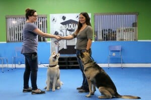 CGC, dog training, Rockin' Dawgs, Rockledge, Canine Good Citizen