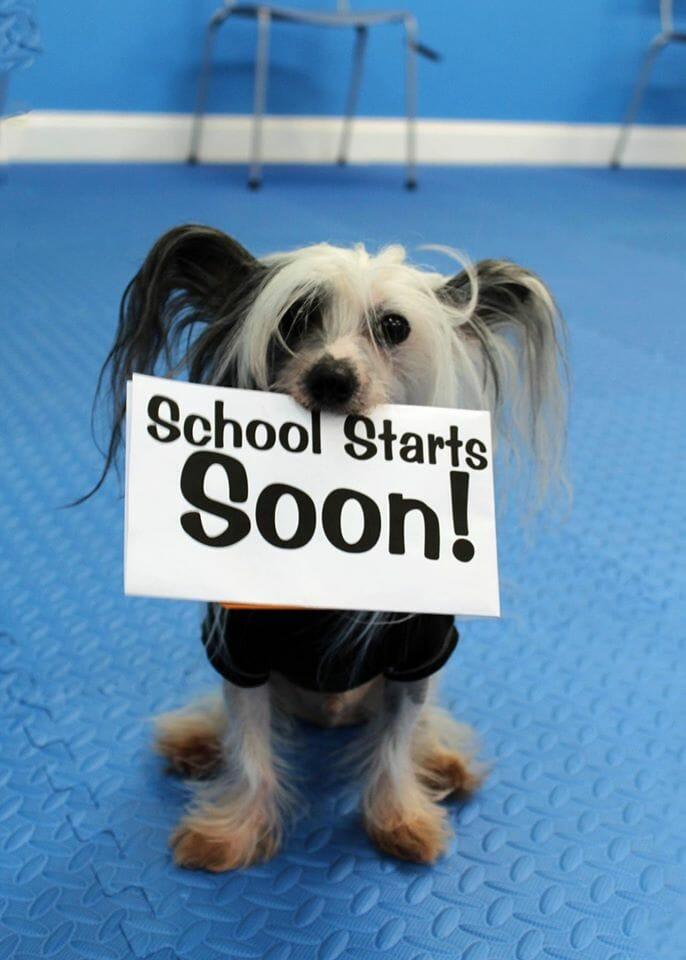 School starts soon at Rockin' Dawgs Positive Dog Training facility in Rockledge