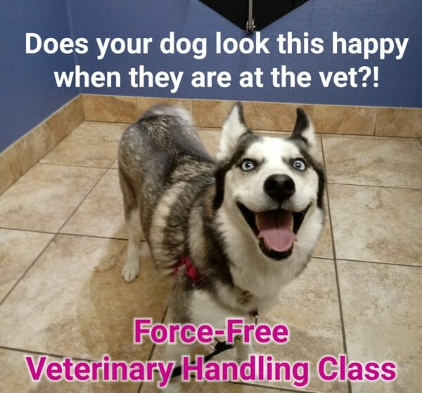 force-free veterinary handling class