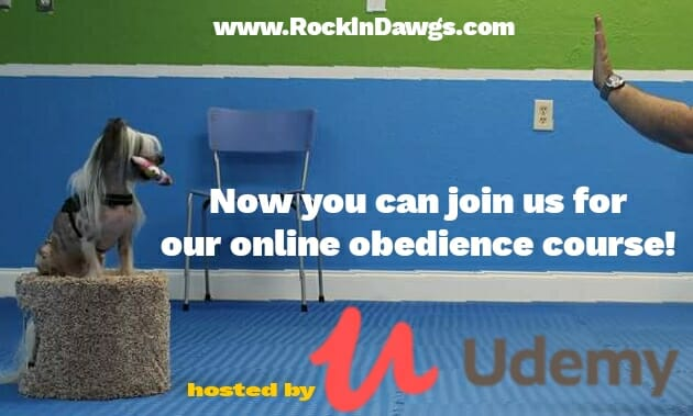 Online courses at Rockin' Dawgs hosted by Udemy