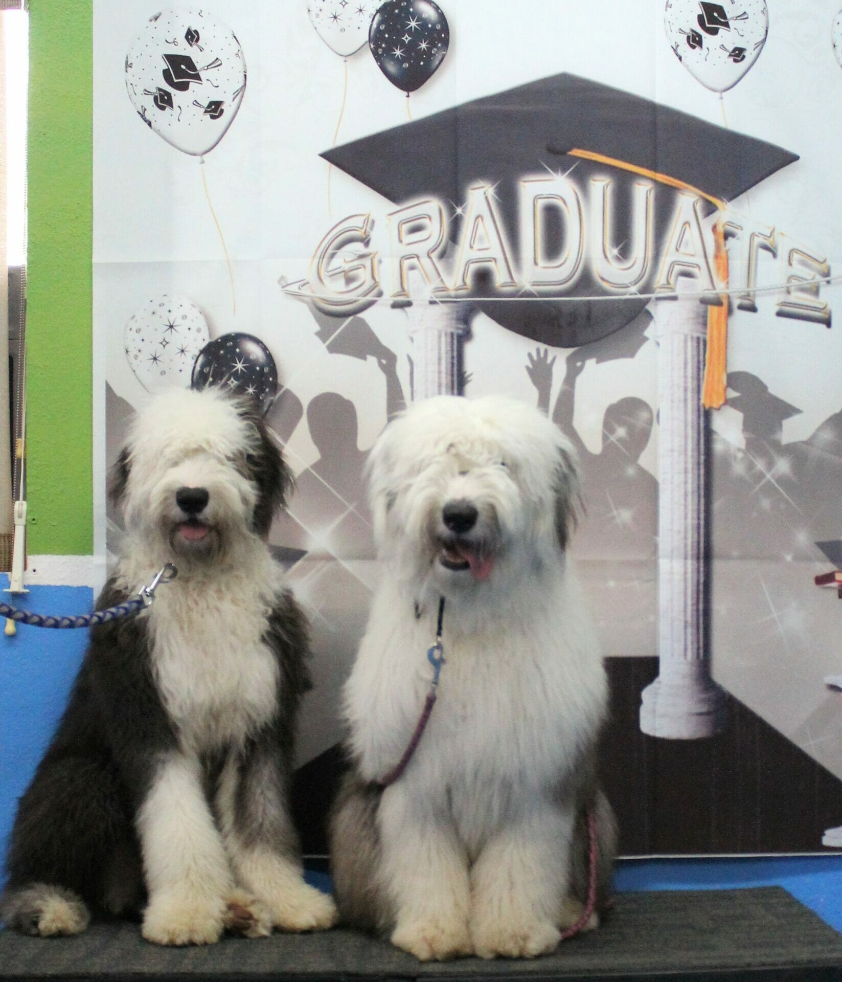 Bugsy & Dafodil graduation at Rockin' Dawgs!