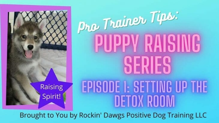Check out Episode 1 of our Puppy Raising Series on Youtube